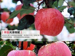 安徽万盛果业暨合肥新疆特产总店团购新疆阿克苏冰糖心苹果